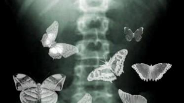 vlinders in je buik